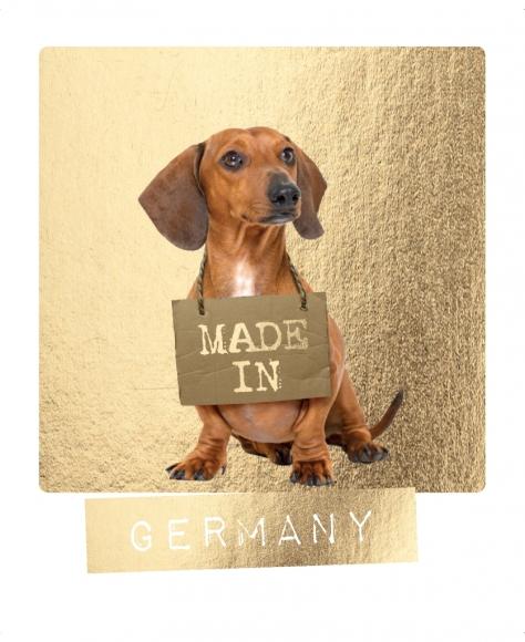 Postkarte: Dackel. Made in Germany.