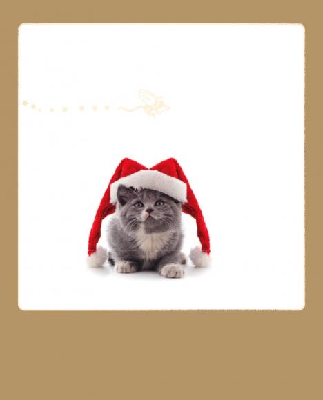 Postkarte: Katze mit Weihnachtsmannmütze