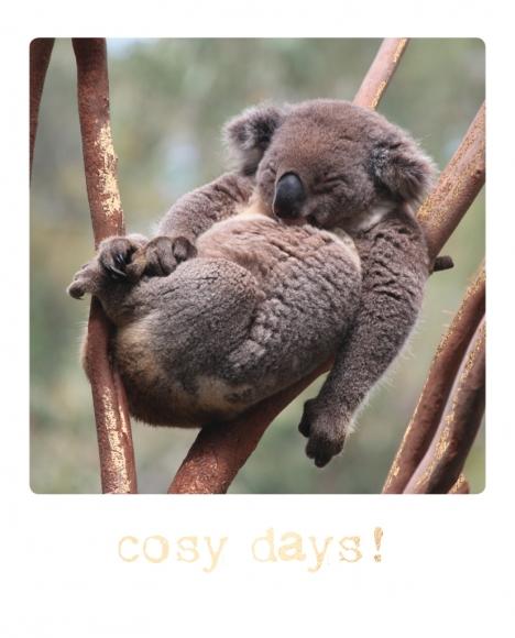 Postkarte: cosy days!