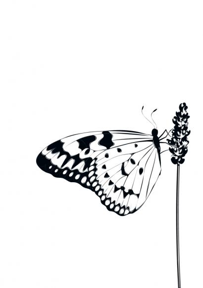 Postkarte: Schmetterling