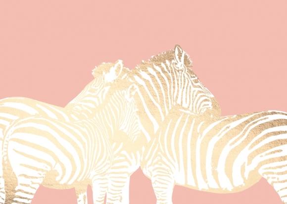 Postkarte: Zebras