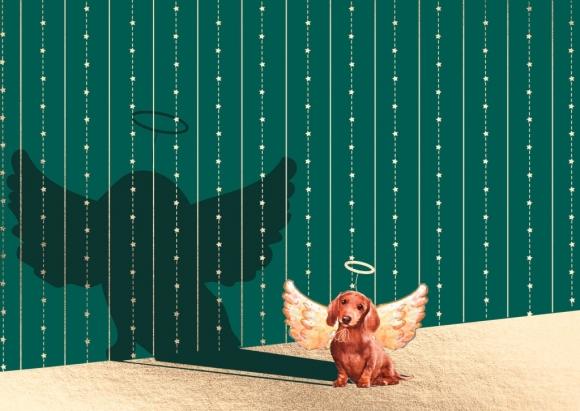 Postkarte: Dackel mit Schatten