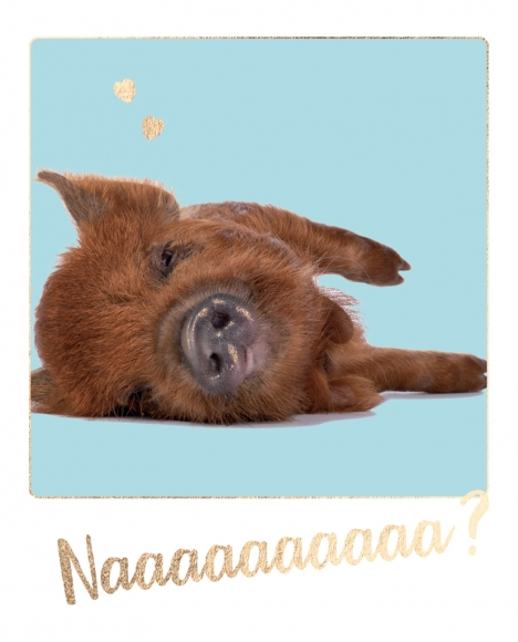 Postkarte: Naaaaaaa? - Wildschweinchen