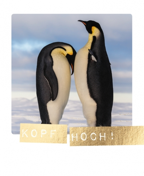 Postkarte: Kopf hoch!