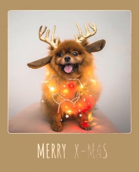 Postkarte: Chihuahua Merry X-Mas