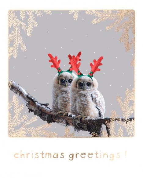 Postkarte: Eulen mit Geweih - christmas greetings!