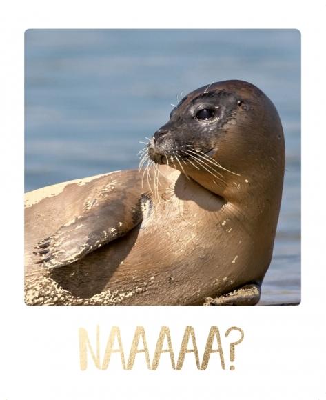 Postkarte: Naaaaa?