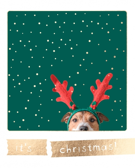 Postkarte: Hund mit Geweih - it's christmas!